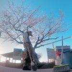 ときわ公園の桜も満開です